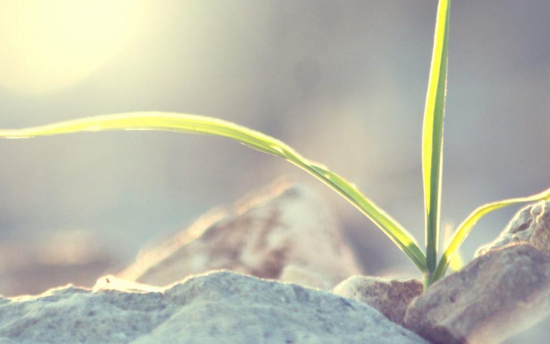 Die Seele im Blick: Was Sie zum Welttag für psychische Gesundheit wissen müssen